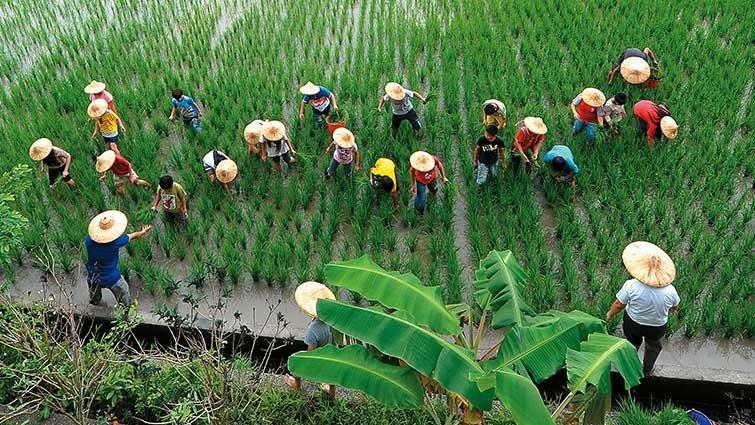 宜蘭深溝國小:75歲農夫老師的種稻課