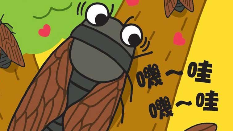 【圖解科學大驚奇】為什麼蟬會鳴叫呢?