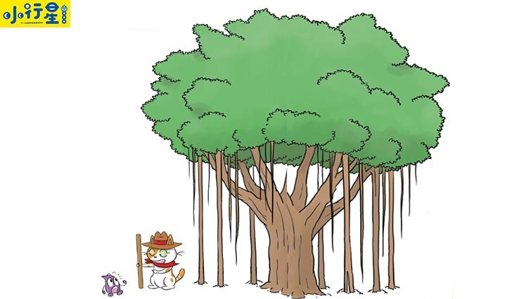 【給父母的科普知識私藏包】大樹幾歲了?