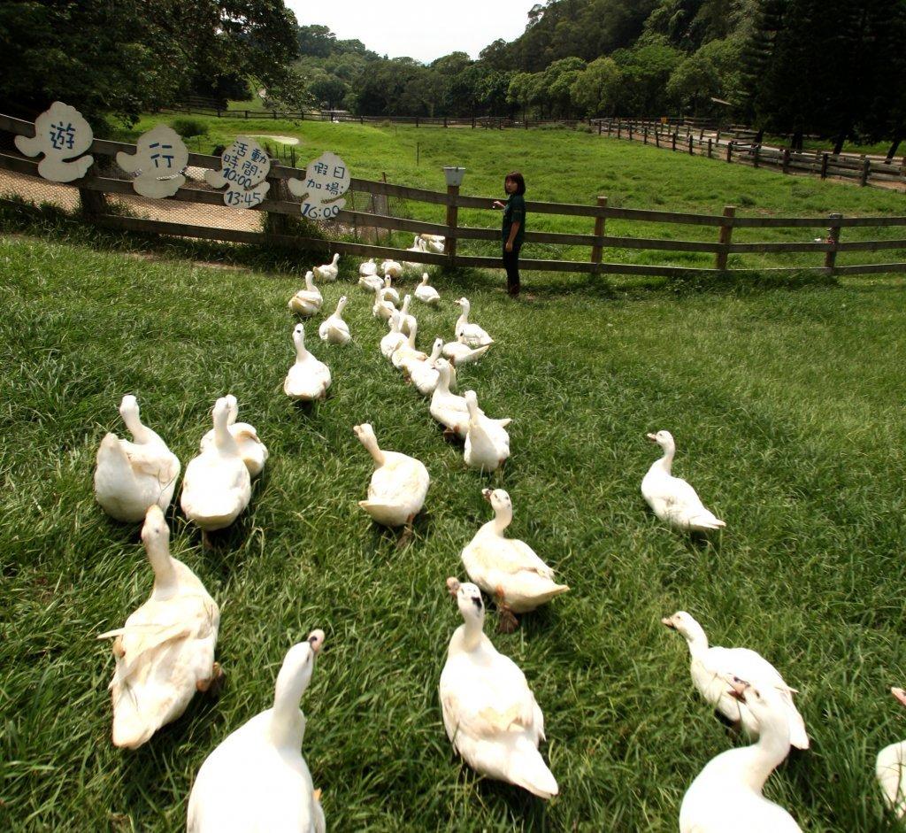 向大地學習 農遊夏令營