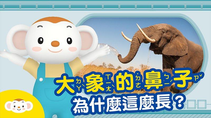 【科學小知識】大象的鼻子為什麼那麼長?
