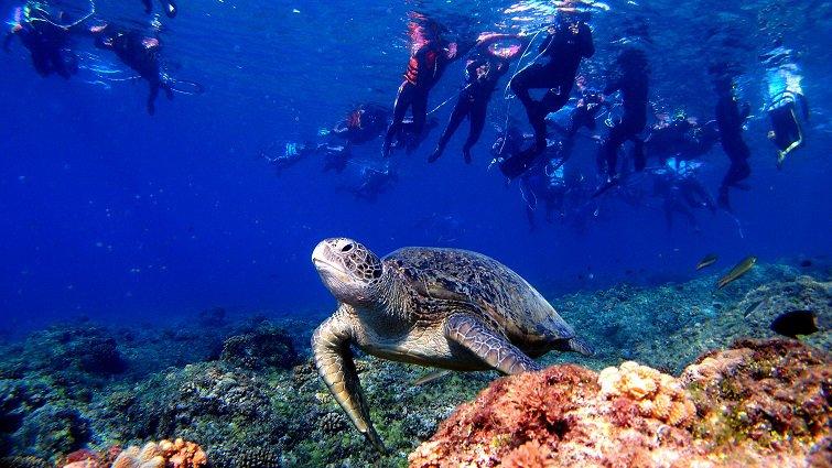 暑假衝一波,台灣10大跳島小旅行:屏東小琉球篇--與海龜同游