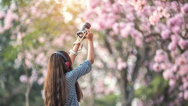 賞櫻不必跑老遠!台北人私藏5處都市裡的櫻花秘境,現在正是開花時