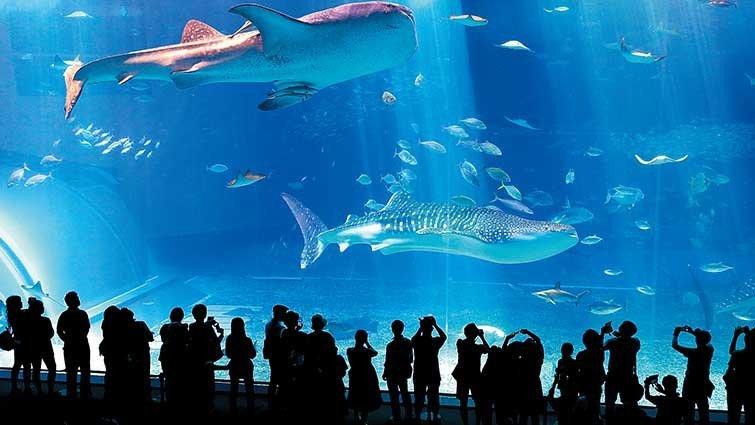 在湛藍透明海與小魚兒嬉戲