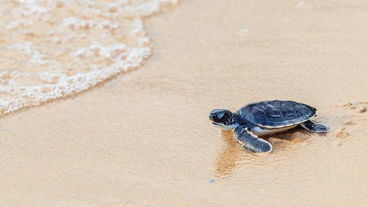 海苔熊:理解憂鬱青少年,幫助「沙灘上的那隻小海龜」回到大海