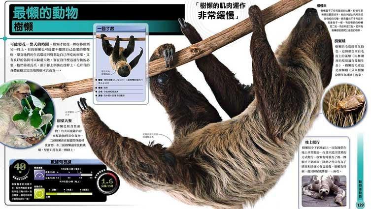 關於慢吞吞樹懶的懶洋洋知識