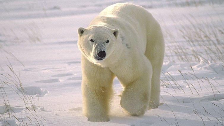 彭菊仙:康提基號北極探險記【菊仙幸福閱讀】