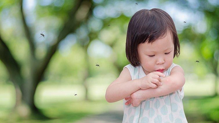 拒絕登革熱!自製防蚊液