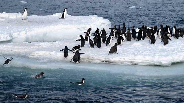 南極探險──企鵝多像人類?企鵝世界真奇妙!