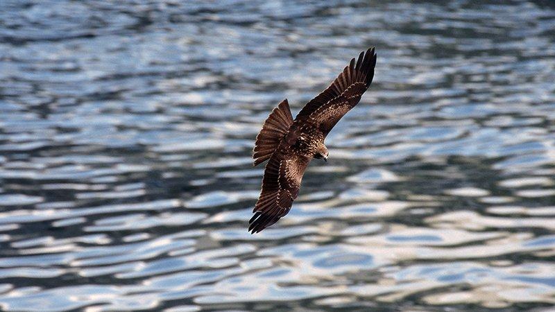 我喜歡老鷹,我喜歡看老鷹在天空飛翔。