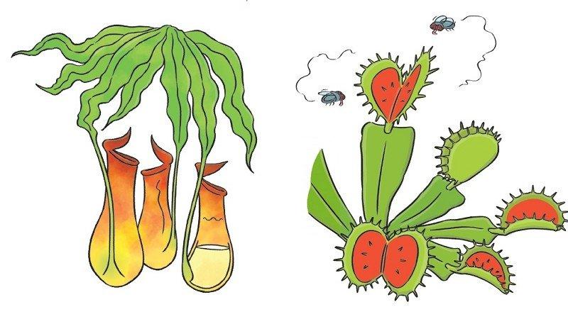 【給父母的科普知識私藏包】植物會吃人嗎?