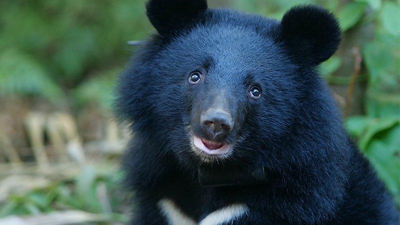跟媽媽走散,全台注目「南安小熊」9個月奇幻之旅的起點
