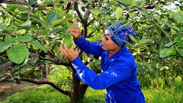 農事小達人,種玉米筍做柚木杯墊-【小小職人體驗全搜集】