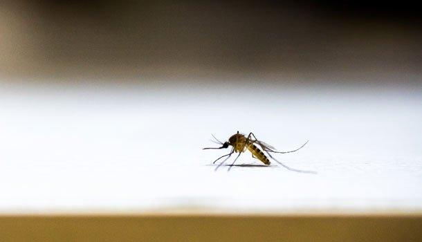 別再當「人體捕蚊燈」!蚊子最愛這3種味道