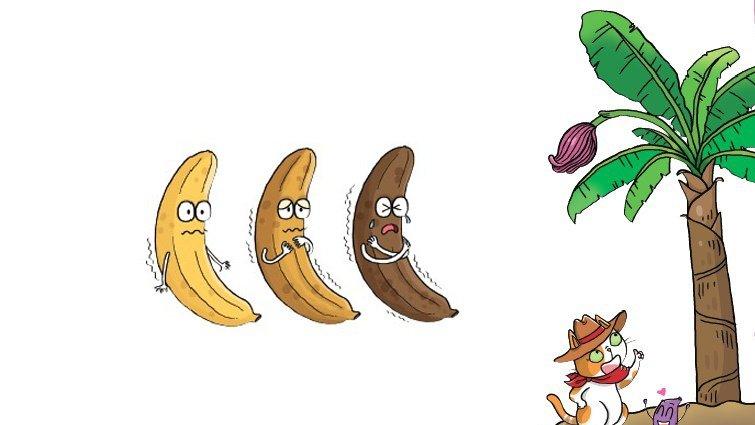 【給父母的科普知識私藏包】香蕉為什麼會變黑?