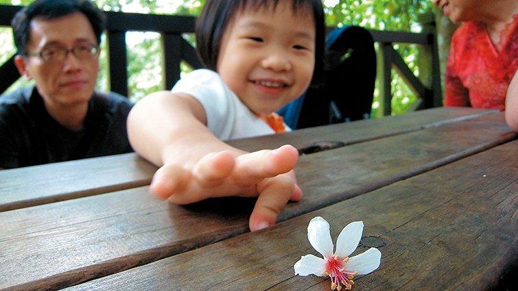 親子小旅行:桐花祕境一日遊
