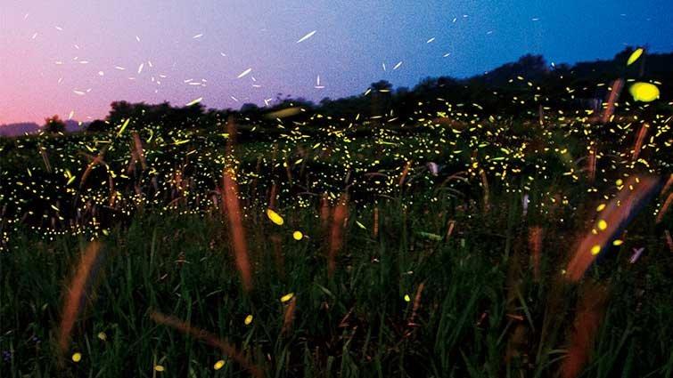 台灣賞螢景點與季節│《尋找螢火蟲》
