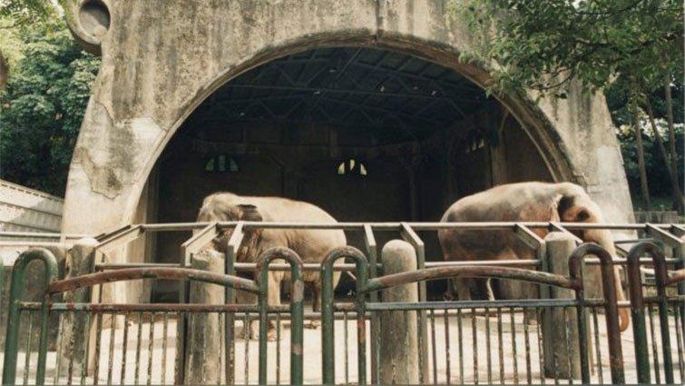 臺北市立動物園遷園30周年,系列活動開跑