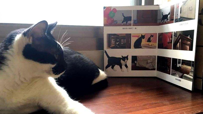 羅怡君:《屋頂上的貓》用一種詩意的方式看待挫折