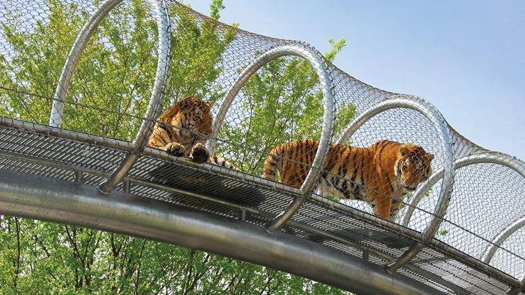 有老虎天橋和猴子天橋的「未來動物園」