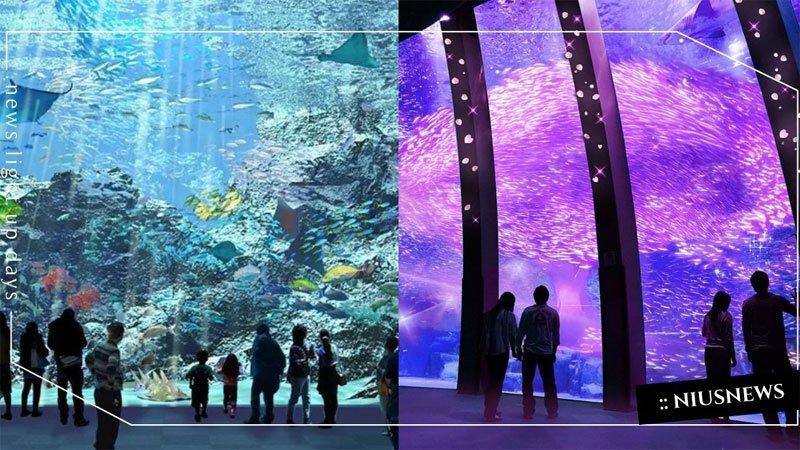 桃園絕美水族館「Xpark」8/7開幕!特色亮點、票價搶先看