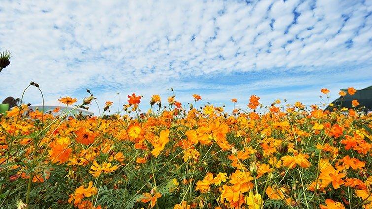 台灣竟然有這麼美的花海!5處最強賞花秘境大公開