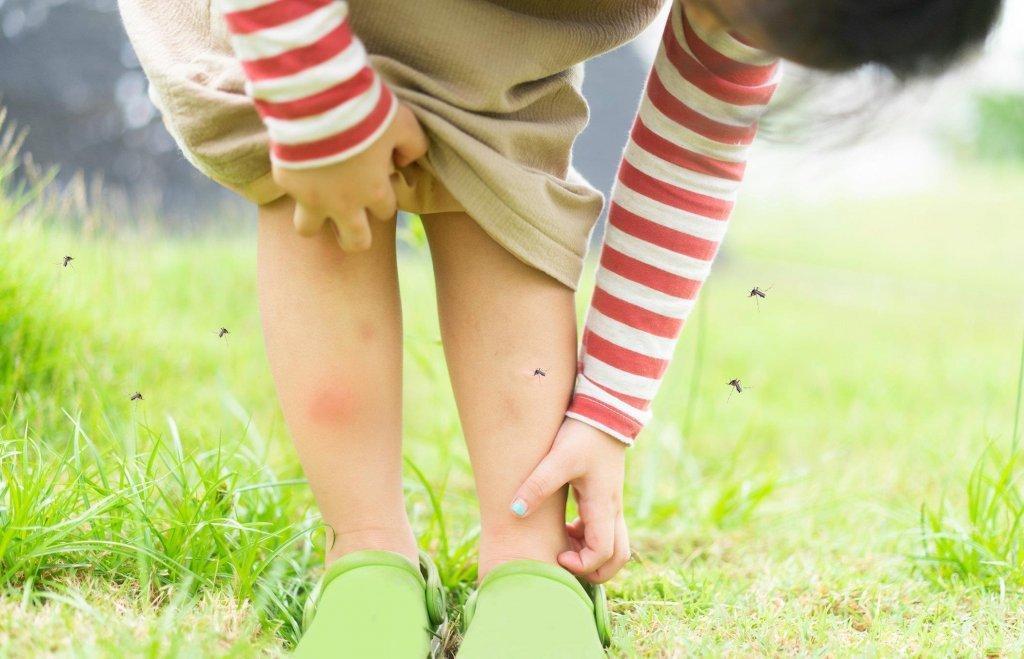 防疫時期建議戶外活動佳,避免蚊蟲叮咬有撇步