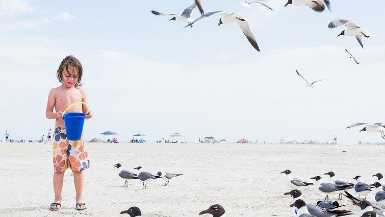 幸佳慧:閱讀林格倫新書《海鷗島的夏天》為幸福定義