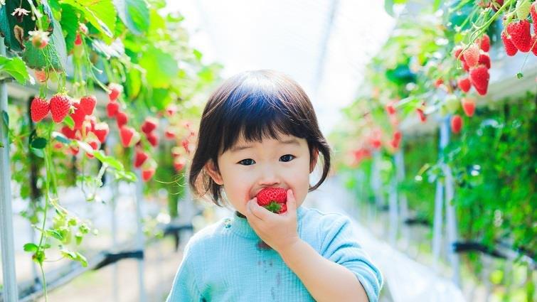 草莓季!全台5大採草莓、順遊景點大公開