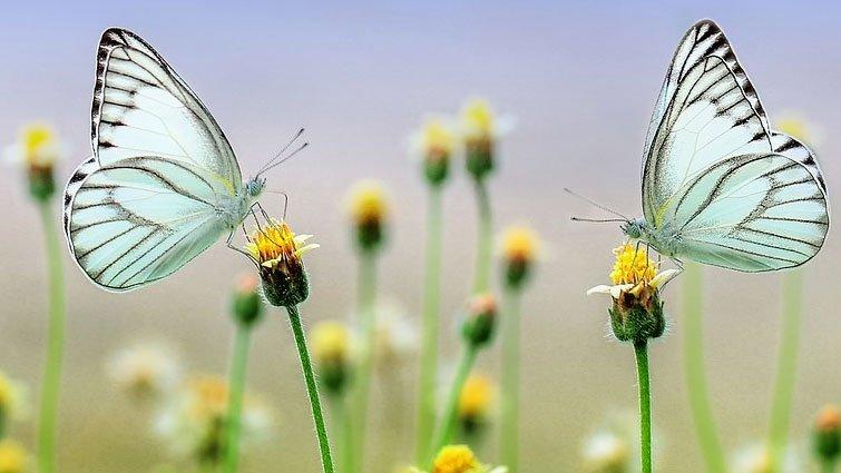 【圖解科學大驚奇】毛毛蟲是如何變成蝴蝶的?