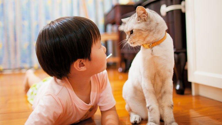 貓咪教我們的一堂課