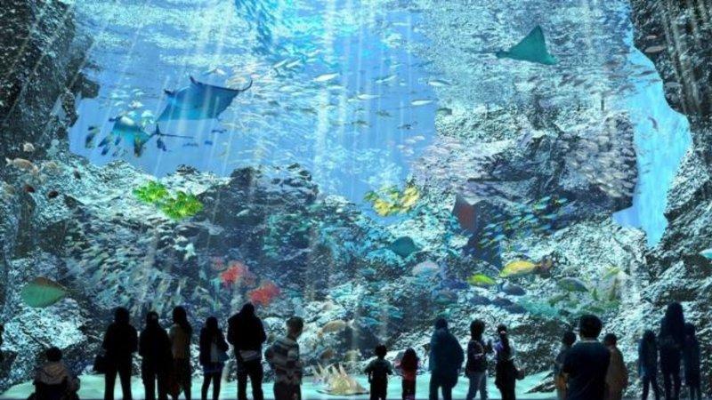 Xpark水族館8/7開幕!5大亮點設施一次看